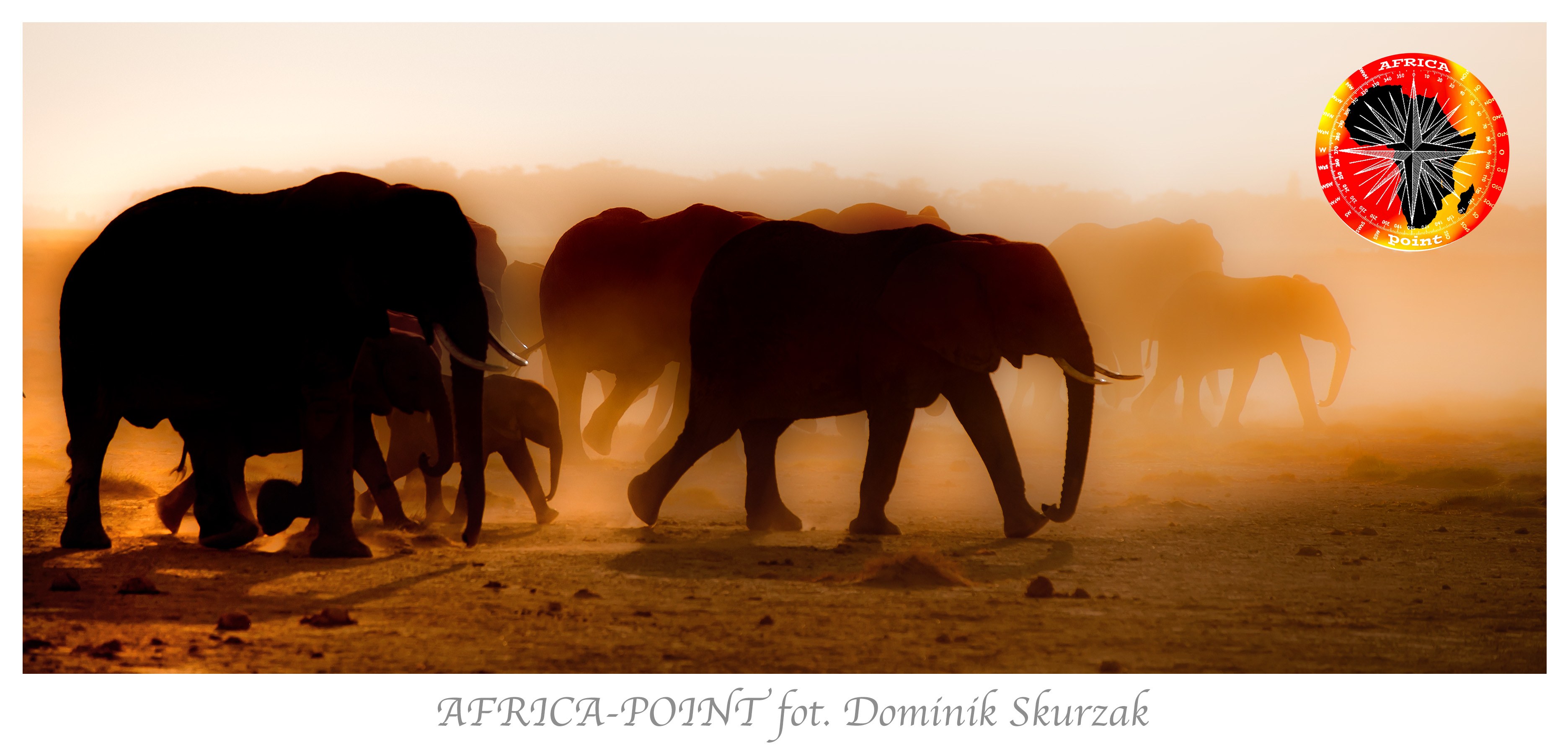 slonie-reklama